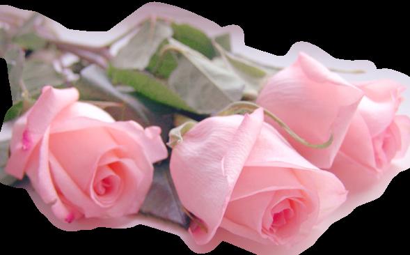 Pour vous, des roses...